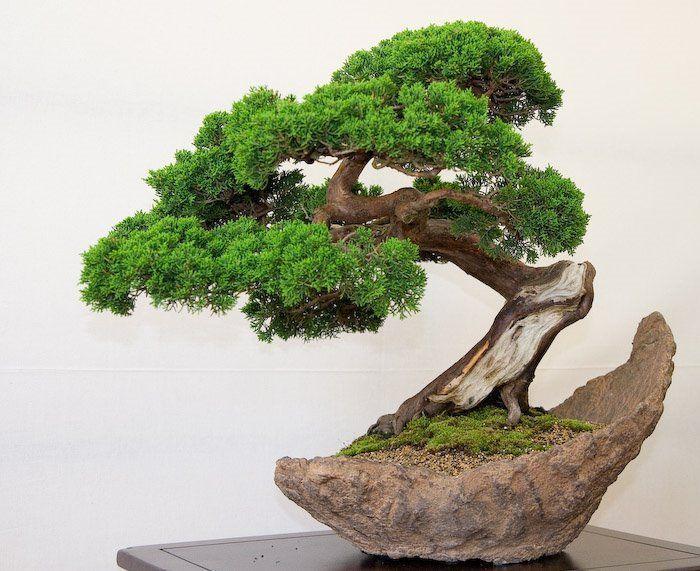 manual-bonsai
