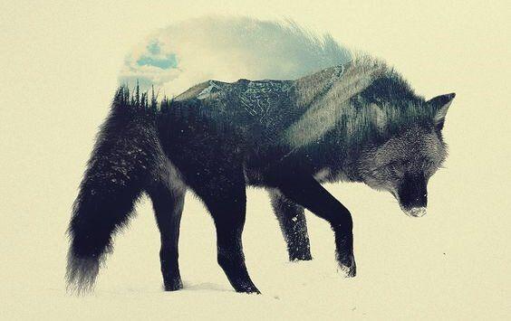 lobo-estepario